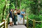 Daintree Rainforest Zipline and Wildlife Tour